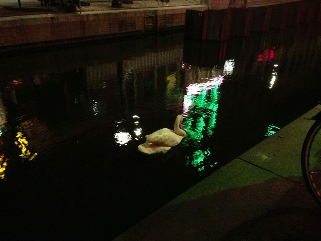 Un cygne nage au milieu du canal dans le Reg light. Fait à noter : c'est le seul endroit où nous avons vu un cygne durant notre voyage.