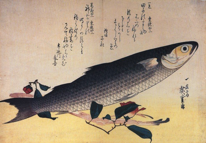 « Hiroshige Grey mullet and camellia » par Hiroshige — http://visipix.com/. Sous licence Public domain via Wikimedia Commons - http://commons.wikimedia.org/wiki/File:Hiroshige_Grey_mullet_and_camellia.jpg#mediaviewer/Fichier:Hiroshige_Grey_mullet_and_camellia.jpg