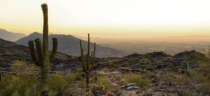 le désert de l'arizona près de Phoenix avec des cactus en avant plan