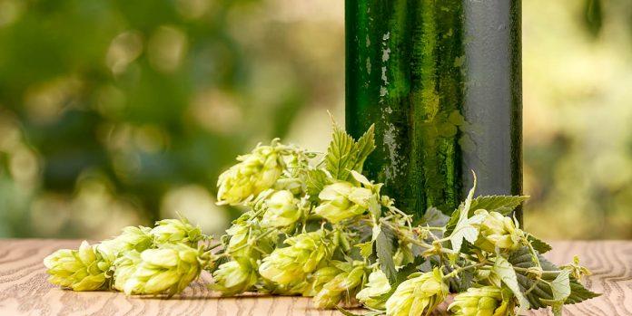Bouteilles verte et cocottes de houblon sur une table à l'extérieur